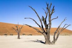 Árboles muertos foto de archivo libre de regalías