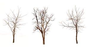 Árboles muertos Fotografía de archivo libre de regalías