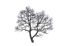 Árboles muertos. Imagen de archivo libre de regalías