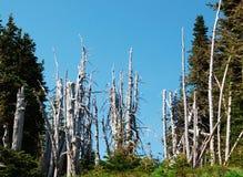Árboles muertos Imagenes de archivo