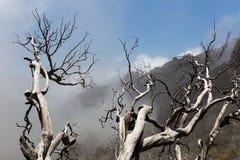 Árboles muertos Imagen de archivo