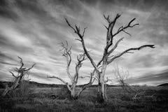 Árboles muertos fotos de archivo
