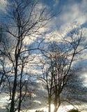 Árboles muertos Foto de archivo