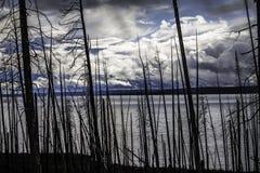 Árboles muertos al lado del lago Imagen de archivo libre de regalías