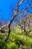 Árboles muertos altos en montañas foto de archivo