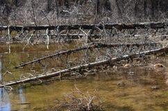 Árboles muertos caidos que mienten en un pantano Imágenes de archivo libres de regalías