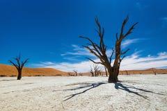 Árboles muertos de Camelthorn contra el cielo azul en Deadvlei, Sossusvlei Imagenes de archivo
