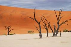 Árboles muertos. Deadvlei, Sossusvlei, Namib-Naukluft P Imagen de archivo libre de regalías