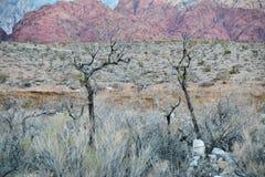 Árboles muertos del desierto Fotografía de archivo libre de regalías