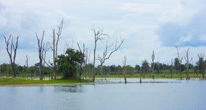 Árboles muertos derechos que murieron en el río Imágenes de archivo libres de regalías