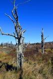 Árboles muertos en Canaan Wilderness Imagen de archivo libre de regalías