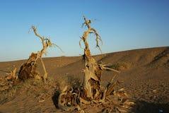 Árboles muertos en desierto Fotos de archivo libres de regalías