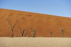 Árboles muertos en desierto Imágenes de archivo libres de regalías