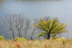 Árboles muertos en el lago Fotografía de archivo