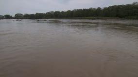 Árboles muertos en el llano llano del río, Colombia almacen de video