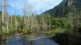 Árboles muertos en Kamikochi en las montañas japonesas Imagen de archivo libre de regalías