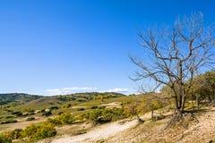 Árboles muertos en la ladera Imágenes de archivo libres de regalías