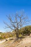 Árboles muertos en la ladera Fotografía de archivo