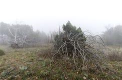Árboles muertos en la niebla Fotos de archivo libres de regalías