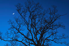 Árboles muertos en la noche con una media luna Imagenes de archivo