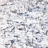 Árboles muertos en la tierra Nevado Imagen de archivo libre de regalías