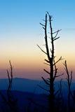 Árboles muertos en las montañas ahumadas Fotos de archivo