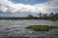 Árboles muertos en las orillas de Naivasha Foto de archivo
