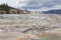 Árboles muertos en Mammoth Hot Springs Fotografía de archivo libre de regalías
