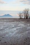 Árboles muertos en playa durante la bajamar Fotos de archivo