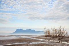 Árboles muertos en playa durante la bajamar Fotos de archivo libres de regalías