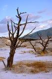 Árboles muertos en terraza Imagen de archivo