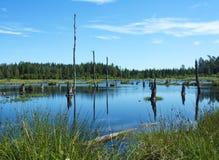 Árboles muertos en un lago Fotos de archivo libres de regalías