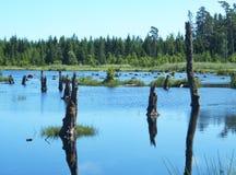 Árboles muertos en un lago Imagenes de archivo