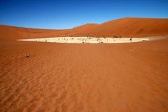 Árboles muertos en Vlei muerto, desierto del acacia de Namib Fotografía de archivo