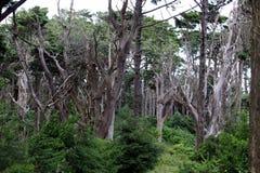 Árboles muertos entre el bosque vivo Fotos de archivo libres de regalías