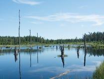 Árboles muertos i un lago Imagen de archivo libre de regalías