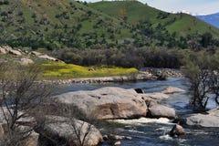 Árboles muertos a lo largo del lado un río imagen de archivo libre de regalías