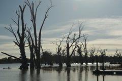 Árboles muertos viejos en el agua Imagen de archivo