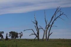 Árboles muertos y su uso Imagen de archivo