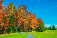 Árboles multicolores, césped verde y cielo azul Fotos de archivo libres de regalías