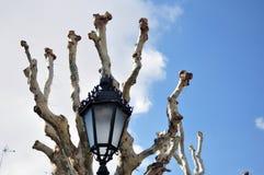 Árboles mutilados Foto de archivo libre de regalías