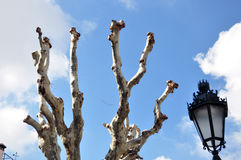 Árboles mutilados Imagenes de archivo