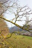 árboles naturaleza y ramas en el mes de invierno enero Foto de archivo libre de regalías
