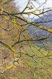 árboles naturaleza y ramas en el mes de invierno enero Fotografía de archivo