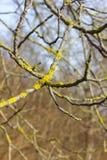 árboles naturaleza y ramas en el mes de invierno enero Foto de archivo