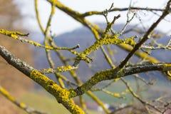 árboles naturaleza y ramas en el mes de invierno enero Imagen de archivo