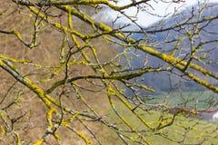 árboles naturaleza y ramas en el mes de invierno enero Imágenes de archivo libres de regalías