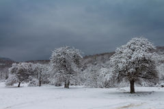 Árboles Nevado Foto de archivo libre de regalías