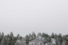 Árboles Nevado Fotografía de archivo
