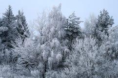Árboles Nevado Foto de archivo